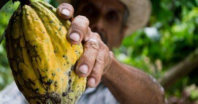 Fructul de cacao