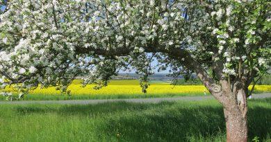 Tratamente naturiste impotriva alergiilor de primavara