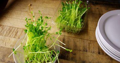 germenii de seminte