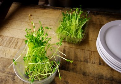 Germenii de seminte, de ce sa ii consumi