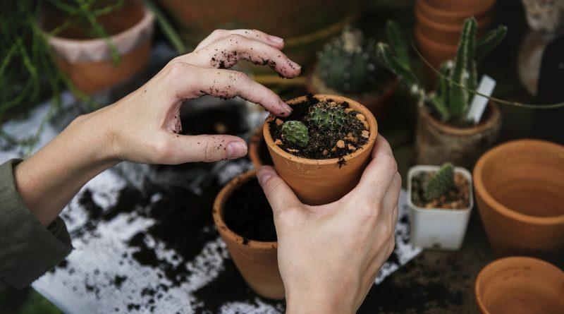 plante care te ajuta sa dormi