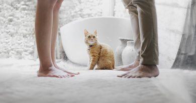 de ce iubesc femeile pisicile