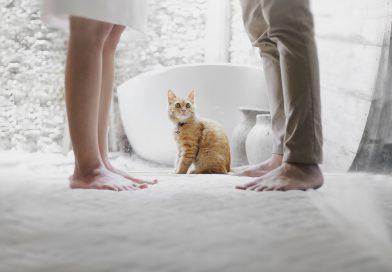 De ce femeile iubesc pisicile – ce arata studiile