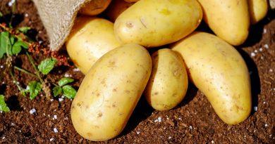 cartofii noi