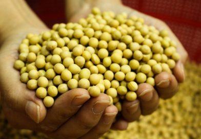 Dieta cu soia – de ce functioneaza atat de bine!