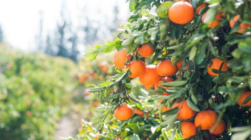 dieta cu clementine