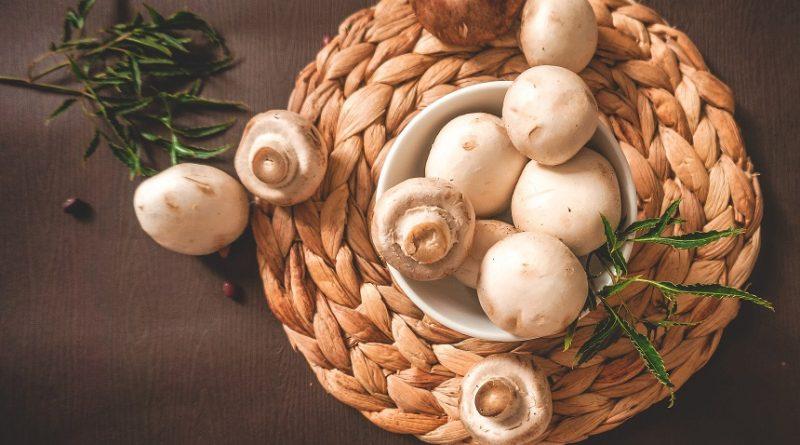 ciupercile champignon