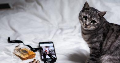 De ce pisicile dorm pe stapanii lor – ce nu stiai despre feline