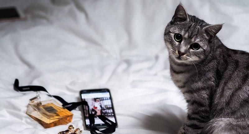 De ce pisicile dorm pe stapanii lorDe ce pisicile dorm pe stapanii lor