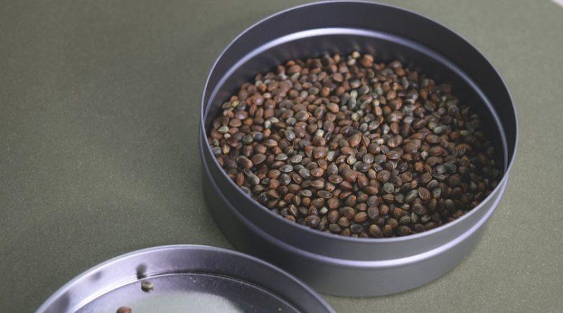 Semintele de canepa
