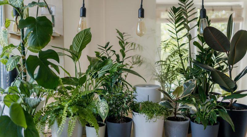 Plante care aduc energie pozitiva
